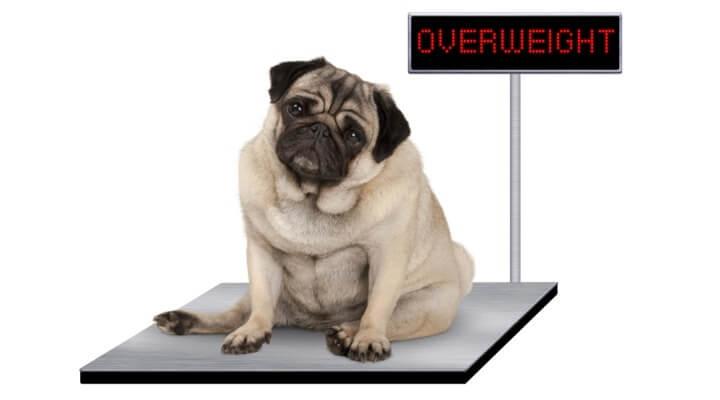 A kutya emésztési sajátosságai