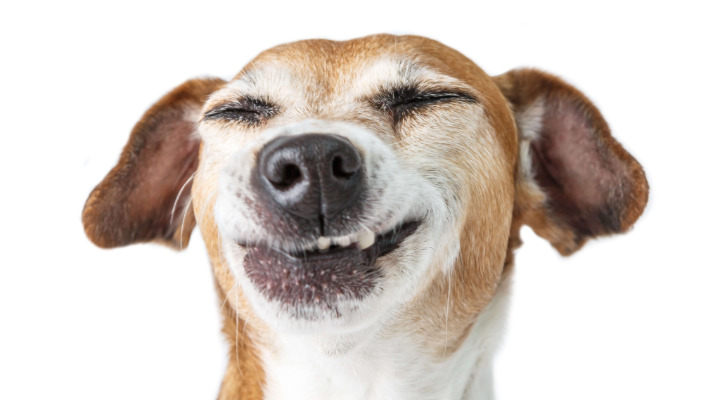 Miért esznek a kutyák bélsarat?